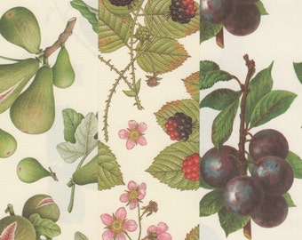 Italian Fruit Designs on 12x12 Art Papers for Paper Crafts Bookbinding and Decor