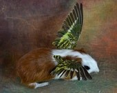 """Mature,taxidermy of guinea-pig with wing""""Angel guinea-pig""""free shipping to everywhere"""