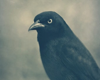 Gothic Bird Photography black,gothic,raven,goth inspired print,sepia,crow,bird lover's gift,dramatic,dark,grim,haunting,raven like,closeup