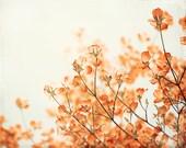 "Orange Flower Photography, Floral Wall Art, Orange Rust Nature Photo, Flower Picture, Orange Cream Nature Decor, Spring Branch, ""Apricot"""