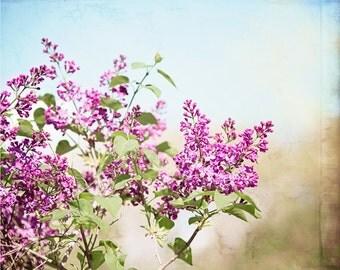 """Lavender Flower Photography, Purple Blue Floral Art, Aqua Blue Green Nature Print, Purple Lavender Decor, Spring Flower Picture, """"Lavender"""""""