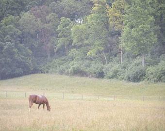 Horse Photography Print 12x18 Fine Art Pennsylvania Farm Country Decor Farmhouse Decor Rustic Field Summer Landscape Photography Print.