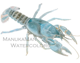 Crayfish Watercolor study 2 (Blue) by Damon Crook (sized for 11x 14 frame)