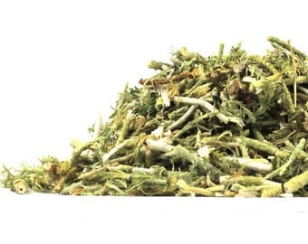 Club Moss, Wild Harvested