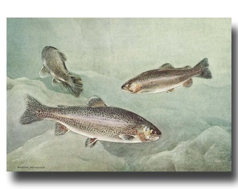 """Rainbow Trout Print, Lake Decor (1930s Fish Art, Fishing Gifts for Men) --- """"Rainbow Trout"""" No. 120"""