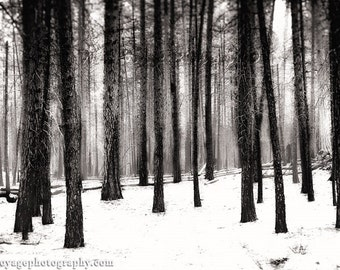 Winter Forest Photo, Nature Photography, Snowy Forest Photo, Black and White Decor, Tree Photograph, Winter Landscape, Dark Forest, Wall Art