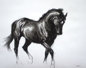 Equine horse LE dressage movement based mounted print 'Black IV' from an original charcoal sketch individually signed