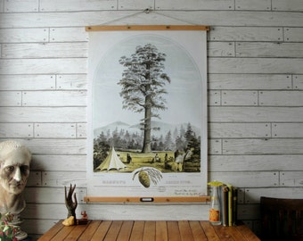 Vintage Tree Pull Down Botanical Chart Reproduction with Canvas Print and Oak Wood and Brass Hanger