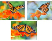 Summer Monarch Butterfly Art Print Set -  Fine Art Photographs - Nature Photos Monarch Butterfly - Set of three - Orange Black Green