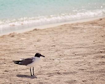 bird on beach color print, still life photography, ocean, beach, bird, bokeh, caribbean beach