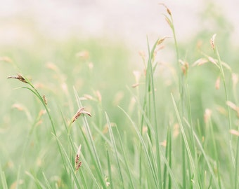 Nature Photography - Grass Photograph - Grass Photo - Whimsical - Minimalist Photo - Nature - Fine Art Photography Print - Green Home Decor