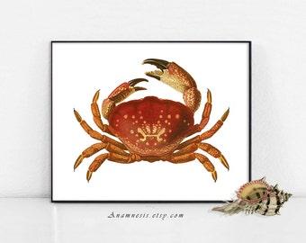 RED CRAB Art Print - High Res Digital Image - printable antique sea life illustration for totes, framing, nursery, bathroom, beach house