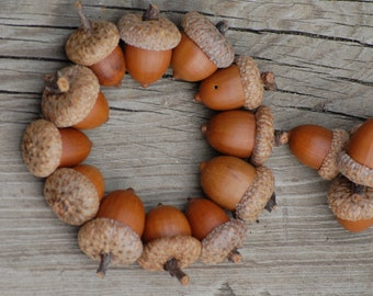 Fall Decorations, Real acorns, Woodland Animals Natural acorns Winter Wedding, Thanksgiving, Holiday, Christmas Decoration,  Home Decor