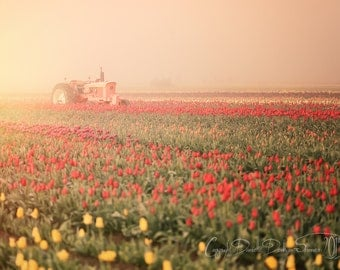 Nature Photography | Flowers | Landscape |Tulip Field | Pink Tractor | Country | Soft Colors
