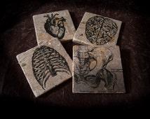 "Vintage medical illustration coasters on tumbled tile measuring 4"" x 4"". Set of 4"