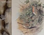 Vintage Bird Print, Wall Art Illustration, Rustic Home Decor, Book Plate, The Dunnock & The Robin