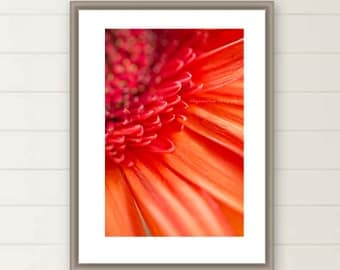 Orange Gerber  Daisy photograph, Summer, Blossom, Flora, Gerber, macro photography, closeup,nature, botanical, mothers day, gift