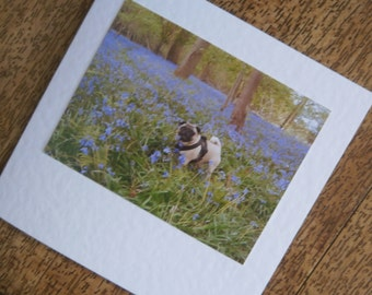Pug card - pug in a Bluebell wood. Individually handmade Pug dog greetings card for any occasion