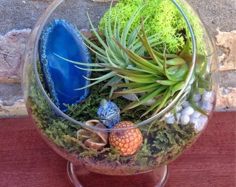Agate and Air Plant Terrarium in either Globe or Footed Vessel - One of a Kind Fathers Day or Birthday Gift