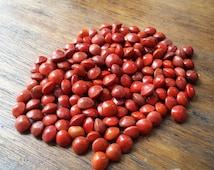 50 grams Natural Red Bead (Adenanthera Pavonina Seeds)