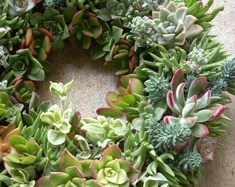 Succulent Wreath/Centerpiece 12 inch diameter