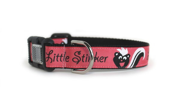 how to get skunk smell out of dog collar