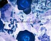 Ultra-violet Sapphire Fine Art Floral Photography Mood Indigo Roses#savethepollinators
