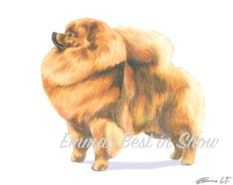 Pomeranian Dog - Archival Fine Art Print - AKC Best in Show Champion - Breed Standard - Toy Group - Original Art Print