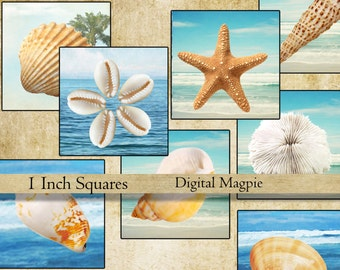 Seashells 1 inch squares digital collage sheet printable inchies instant download square sea images for jewelry crafts scrpbooking