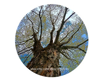 Round tree photo, 12 inch nature photograph, 12x18 fine art print, 18x24 round photo mat, maple tree picture, Unique wall art for home decor