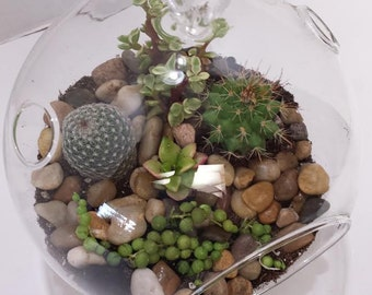 Succulent Plant Glass Globe Terrarium DIY Complete Kit with Two Small Cacti and 2 Small Succulent Plants.
