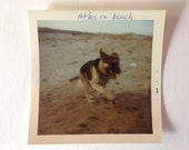 Vintage Kodak Color Photo Dogs Stream Maine Vacation German Shepherd
