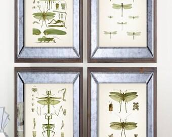 Insect Vintage Print Set - Green - Fine art prints of a vintage natural history antique illustration