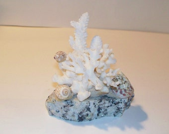 White Coral And Sea Shell Art Decor - Terrarium Supplies.