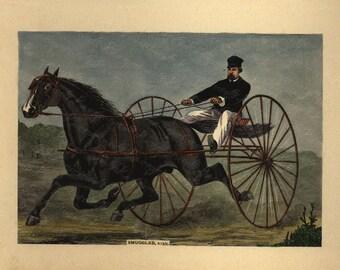 Antique Original Hand colored Engraving of Horse - Smuggler