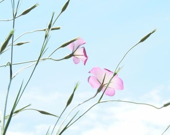 Pink Lavender Flower Photograph - Floral Wall Decor - Pastel - Nature - Nursery Wall Decor - Flower and Sky Art - Flower - Nature Photograph