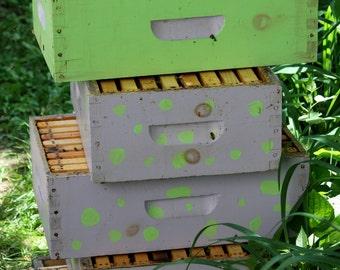 Colorful Beehive (Digital Download)