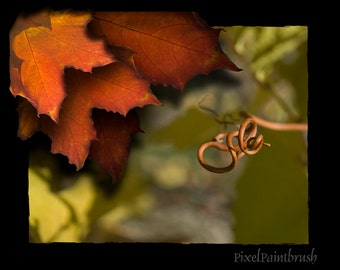 DIGITAL DOWNLOAD, Autumn Leaves, Brown, Green Photo, Grape Tendril Abstract, Black Border, Stock photo, available in print