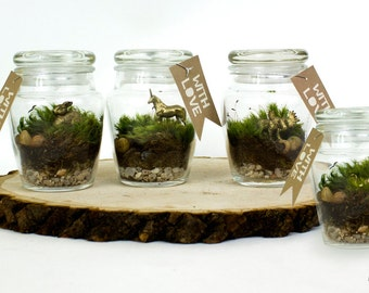 Moss Terrarium Favors // 4 Mini Gifts