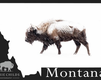 Montana Postcard- Bison in the Storm