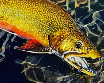 "Brook Trout art: brook trout colored pencil print, Brook Trout caught while fly fishing print 11x14"", brook trout fly fishing, trout drawing"