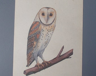 Owl Print / Print on Vintage Paper / Art Illustration to Frame / Love Birds / Paper Ephemera / Family / Wall art