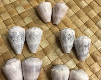 Drilled Conus Coronatus - Crowned Cone shell 5 pairs