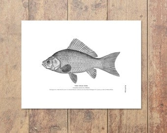 Goldfish Art in Black and White - Fishing Print Nautical Decor Beach Decor Goldfish Print Ocean Home Decor Gift For Dad Father's Day Gift