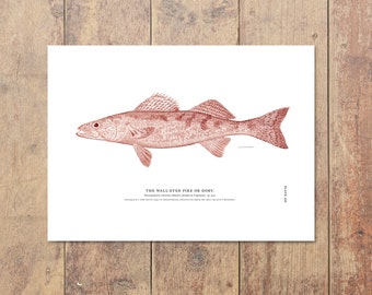 Walleye Art in Red- Fishing Print Minnesota Lake House Nautical Decor Fishing Art Walleye Art Ocean Decor Ocean Wall Decor Father's Day Gift