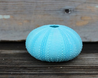 NEW - Beach Decor -  Aqua Sea Urchins  - Wholesale Seashells - Jewelry - Beach Wedding