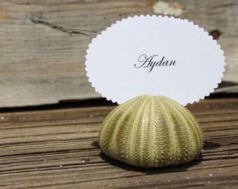 25pc Green Sea Urchin Place Card Holders-  Wedding Shells - Beach Wedding - Urchins