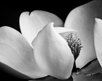 Magnolia Flower, Black and White, Fine Art, Flower Photography
