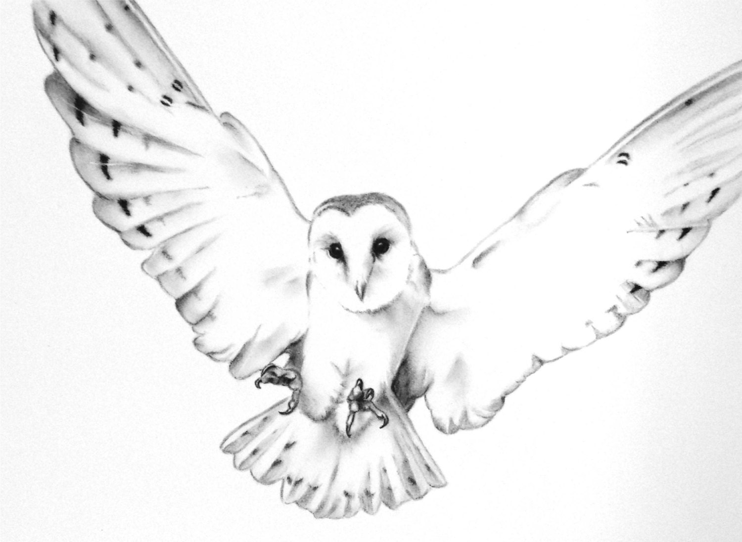 Flying owl drawings black and white - photo#10