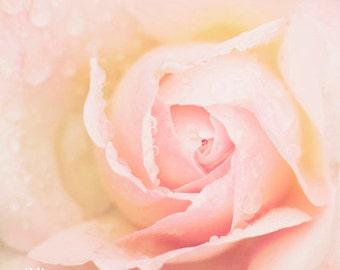 Peach Rose - Photo Print, flower photography, spring, botanical, rose art print